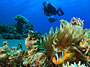 Scuba Dive In Virgin Reefs